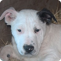 Adopt A Pet :: Michael - in Maine - kennebunkport, ME