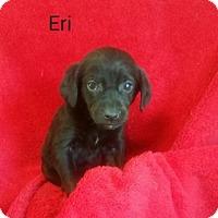 Adopt A Pet :: Eri - Chester, IL