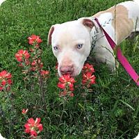 Adopt A Pet :: Montana - Frisco, TX