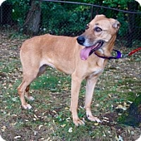 Adopt A Pet :: BELLA ROSA - Albany, NY
