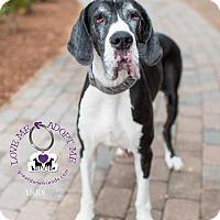 Adopt A Pet :: Annabelle - Huntersville, NC