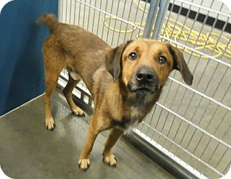 Labrador Retriever Mix Dog for adoption in Henderson, North Carolina - Yoyo
