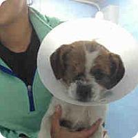 Adopt A Pet :: URGENT ON 12/8  San Bernardino - San Bernardino, CA