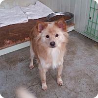 Adopt A Pet :: Issac - Oakton, VA
