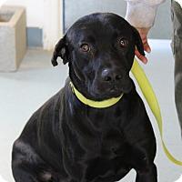 Adopt A Pet :: Night - Allison Park, PA