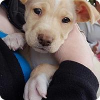 Adopt A Pet :: Xander - Charlotte, NC