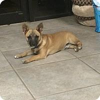 Adopt A Pet :: Maxx - Brunswick, ME