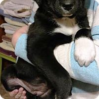 Adopt A Pet :: Leena - Jen - Kalamazoo, MI