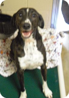 Hound (Unknown Type) Mix Dog for adoption in Wickenburg, Arizona - Mattie