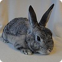 Adopt A Pet :: Charming - Los Angeles, CA