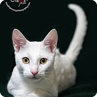 Adopt A Pet :: Maui - Phoenix, AZ