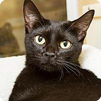 Adopt A Pet :: Jasmine - Irvine, CA