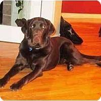 Adopt A Pet :: Chad - Rigaud, QC