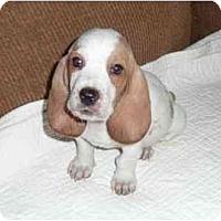Adopt A Pet :: Ceasar - Phoenix, AZ