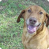 Adopt A Pet :: Tucker - Richmond, VA