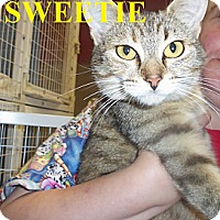 Adopt A Pet :: SWEETIE - Franklin, NC