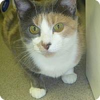 Adopt A Pet :: Jaime - Hamburg, NY