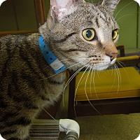 Adopt A Pet :: BP - Medina, OH