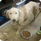 Adopt A Pet :: Mary Ellen  (Has application)