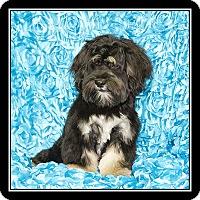 Adopt A Pet :: Tomas (Tommy) - San Dimas, CA