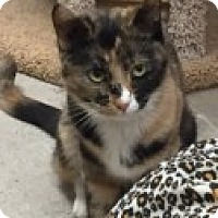 Adopt A Pet :: Carli - Manchester, CT
