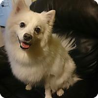 Adopt A Pet :: Floyd - Saskatoon, SK