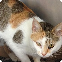 Adopt A Pet :: Capri - East Brunswick, NJ
