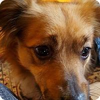 Adopt A Pet :: Benny - Worcester, MA