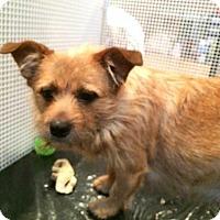 Adopt A Pet :: Abby - Alden, NY