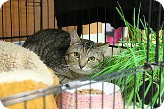 Domestic Shorthair Cat for adoption in Gloucester, Massachusetts - Fish