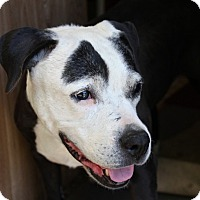 Adopt A Pet :: Tara - Eugene, OR