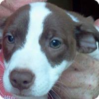 Adopt A Pet :: Peter - Rockaway, NJ