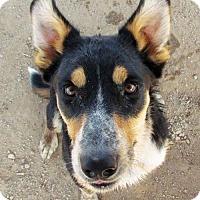 Adopt A Pet :: Kiah - San Tan Valley, AZ