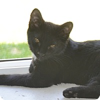 Adopt A Pet :: Spots - Buhl, ID