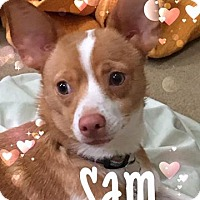 Adopt A Pet :: Sam - Willingboro, NJ