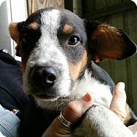 Adopt A Pet :: Debbie - Macomb, IL