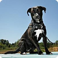 Adopt A Pet :: Abby - Bellingham, WA