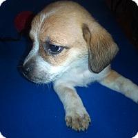 Adopt A Pet :: Mickey - Kendall, NY