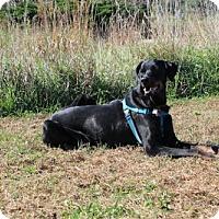 Adopt A Pet :: Dakota - Omaha, NE