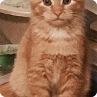 Adopt A Pet :: Pumpkin - Greensburg, PA