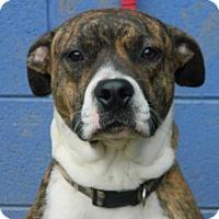 Adopt A Pet :: Creed - Randleman, NC