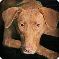 Adopt A Pet :: Nara - Lufkin, TX