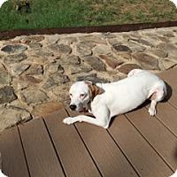 Adopt A Pet :: Alibi (reduced fee) ETAA - Harrisonburg, VA