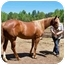 Photo 2 - Quarterhorse for adoption in Greeneville, Tennessee - Estrella