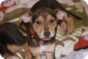 German Shepherd Dog Mix Puppy for adoption in Alpharetta, Georgia - Annie Lennox