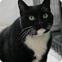 Adopt A Pet :: Zora - Sacramento, CA