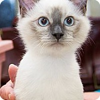 Adopt A Pet :: Kitsi - Irvine, CA