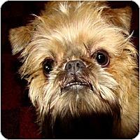 Adopt A Pet :: LEXIE - ADOPTION PENDING - Sun Prairie, WI