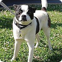 Adopt A Pet :: Bosworth - Staunton, VA