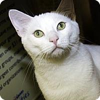 Adopt A Pet :: Sam - Irvine, CA